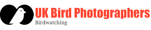 UK Bird Photographers